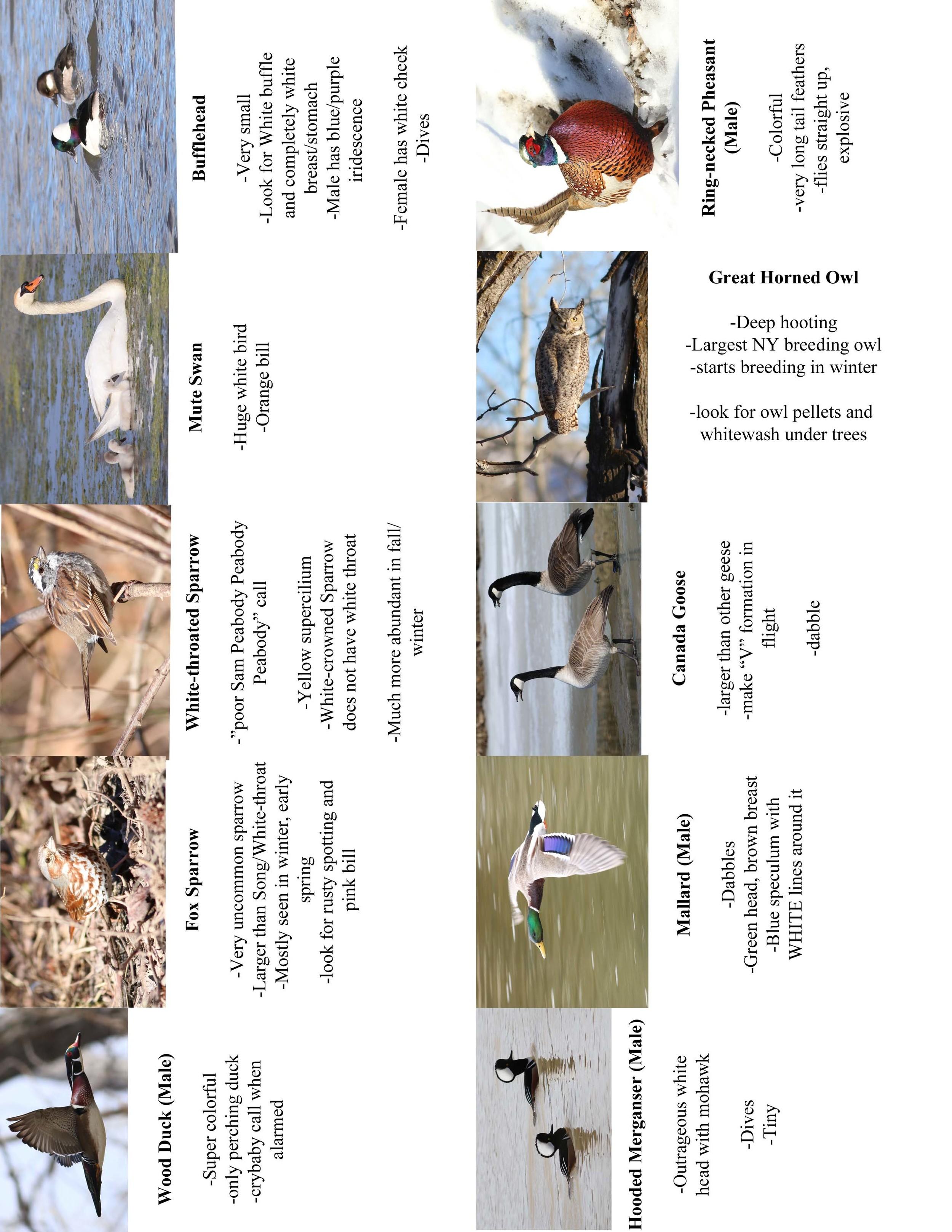 FC Birds3.jpg