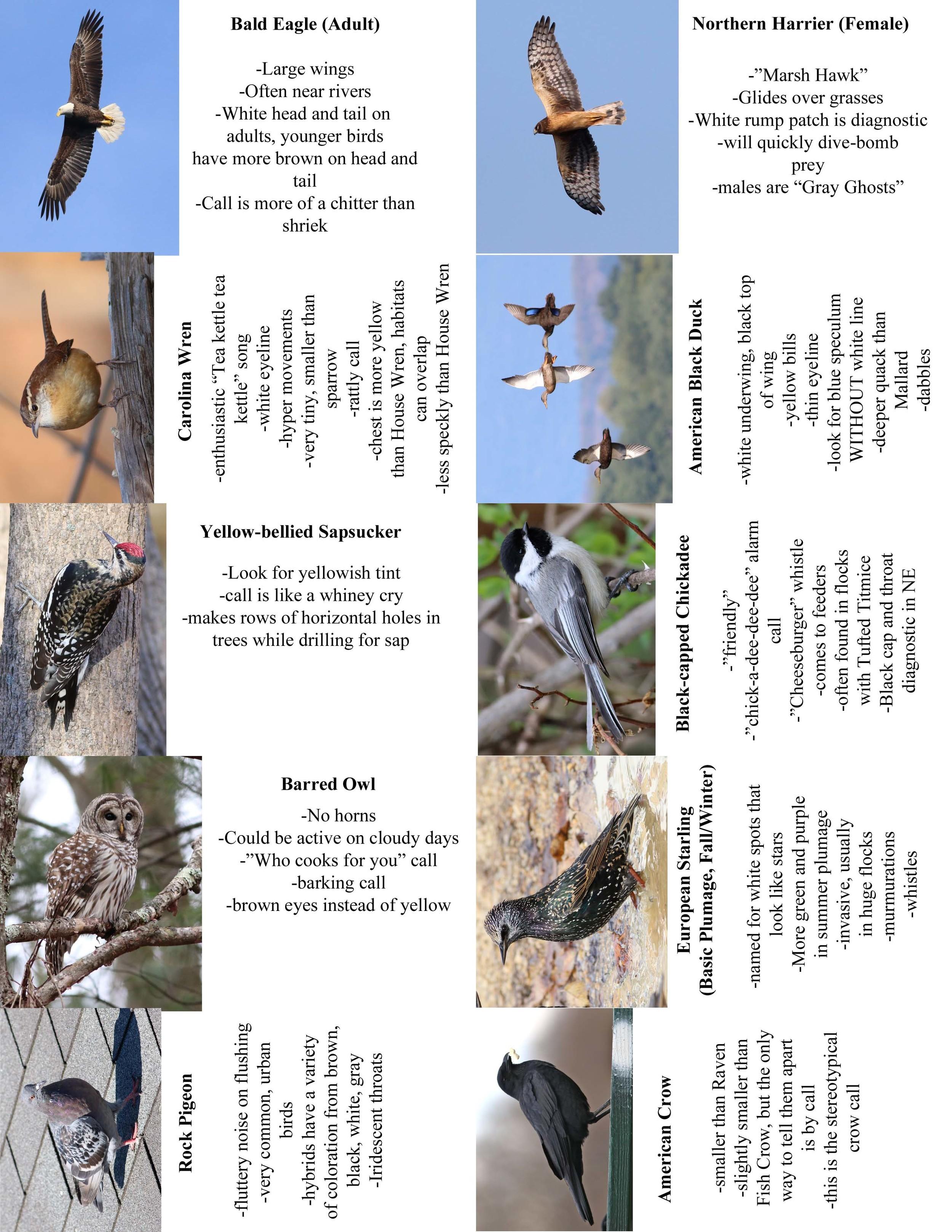 FC Birds4.jpg