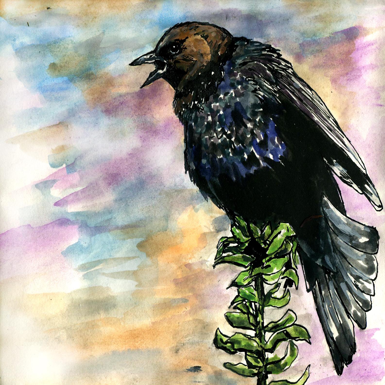124. Brown-headed Cowbird