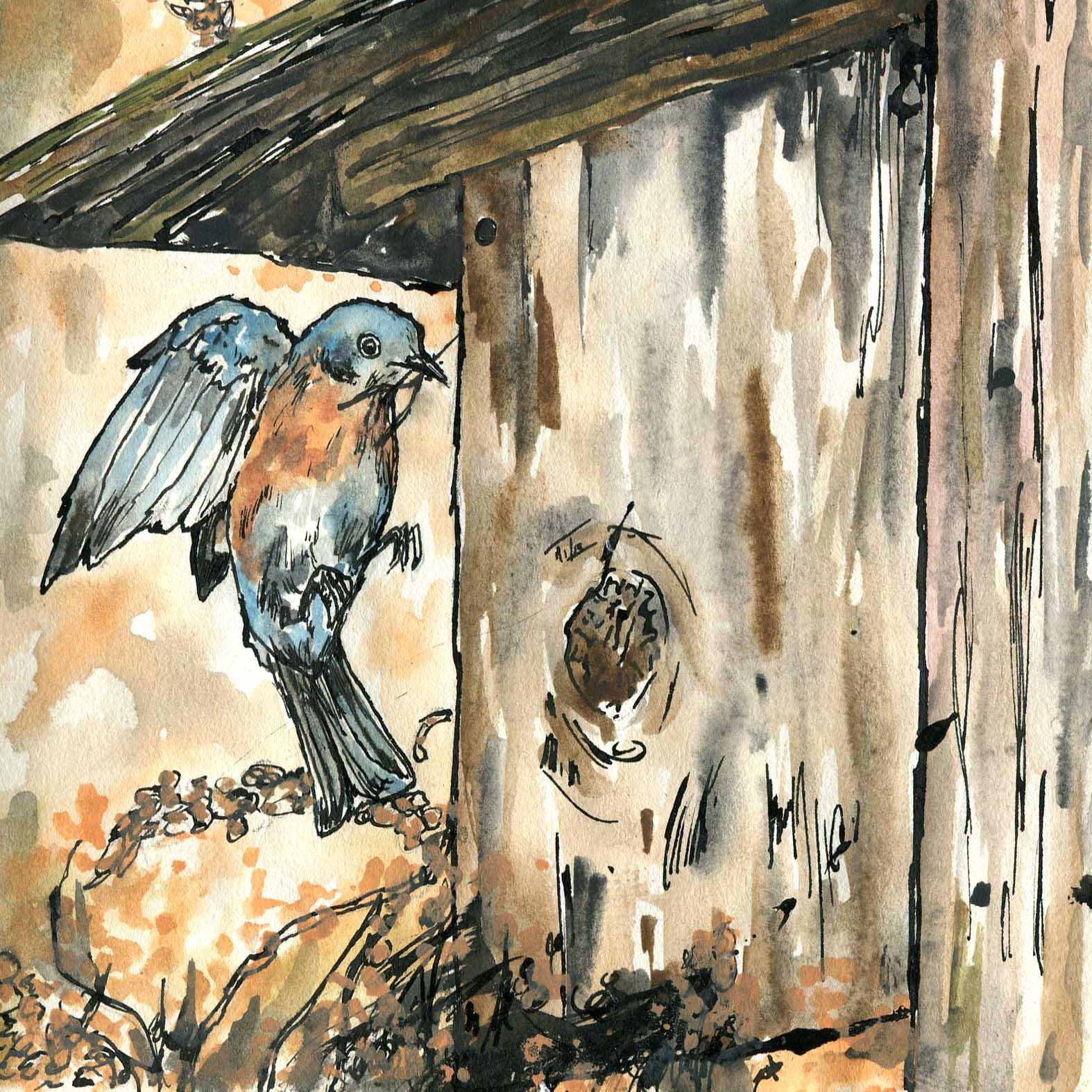 122. Eastern Bluebird