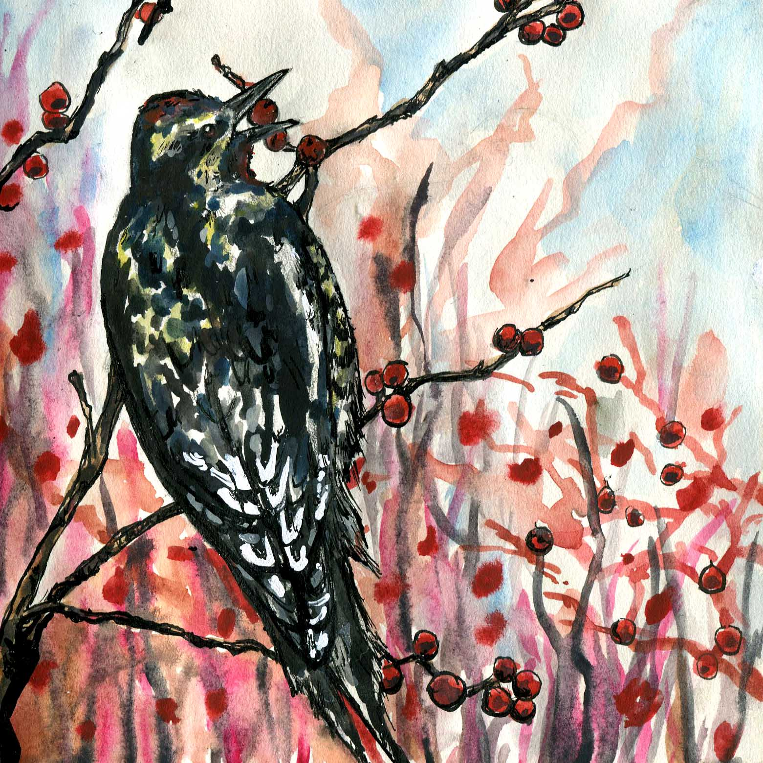 129. Yellow-bellied Sapsucker