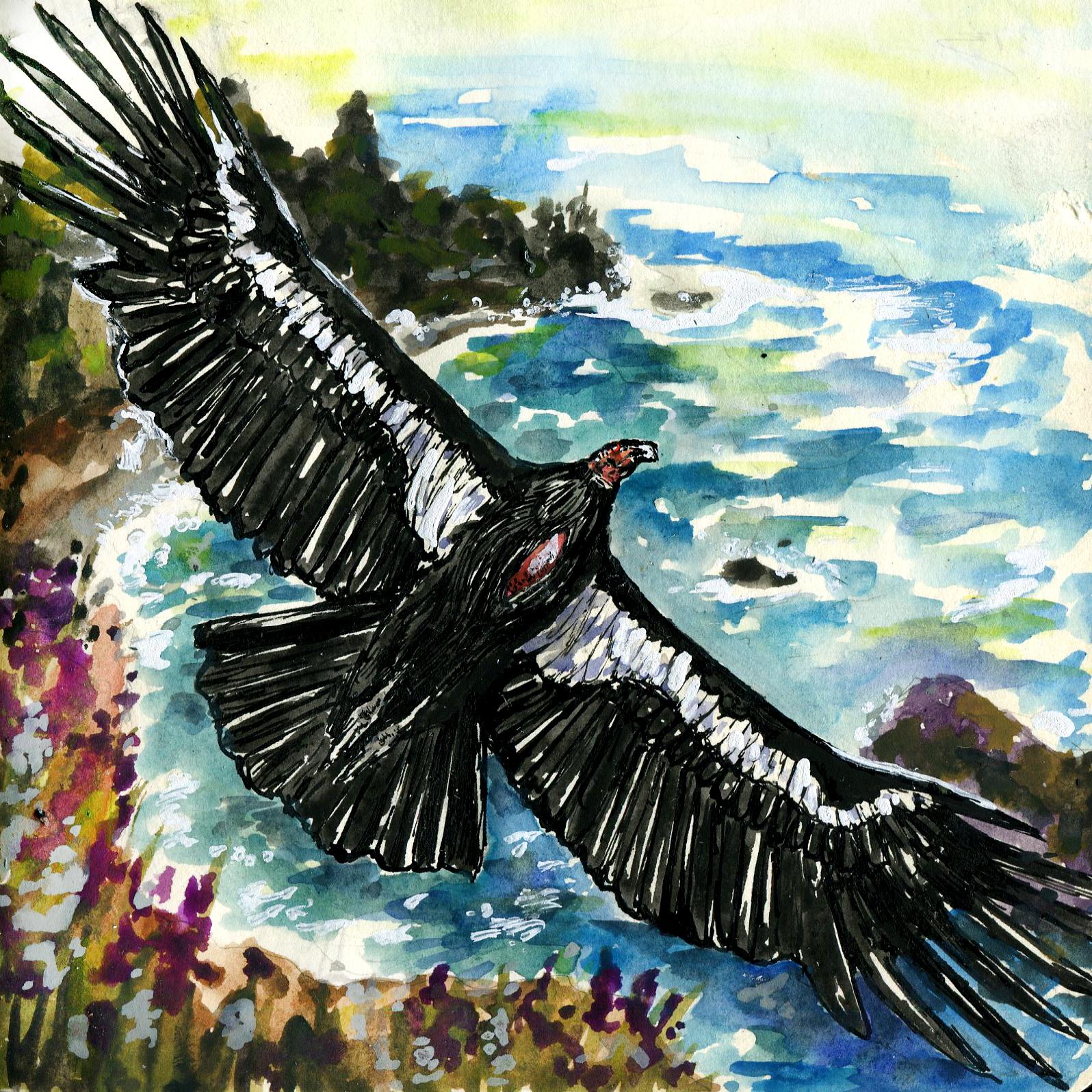 377. California Condor