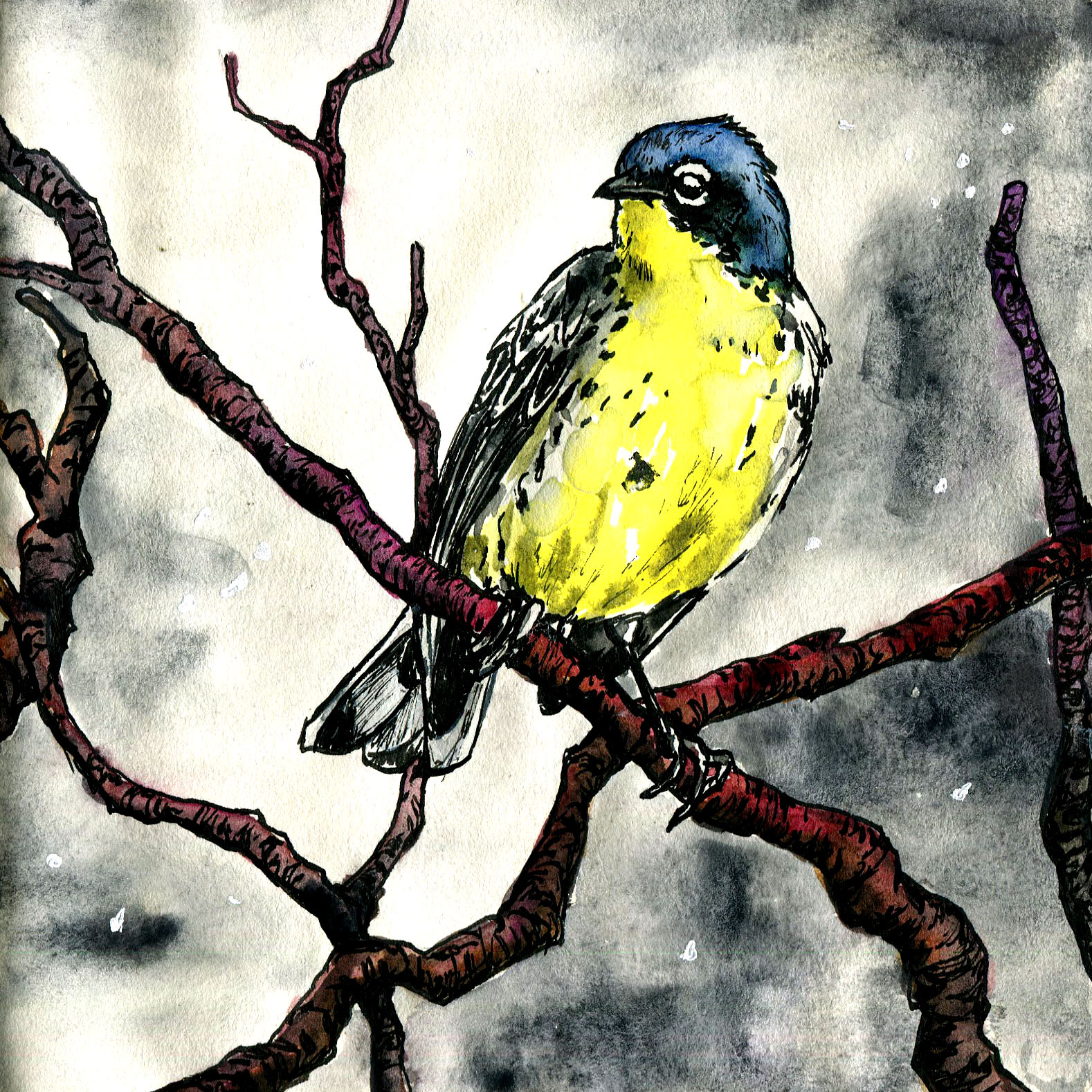 399. Kirtland's Warbler