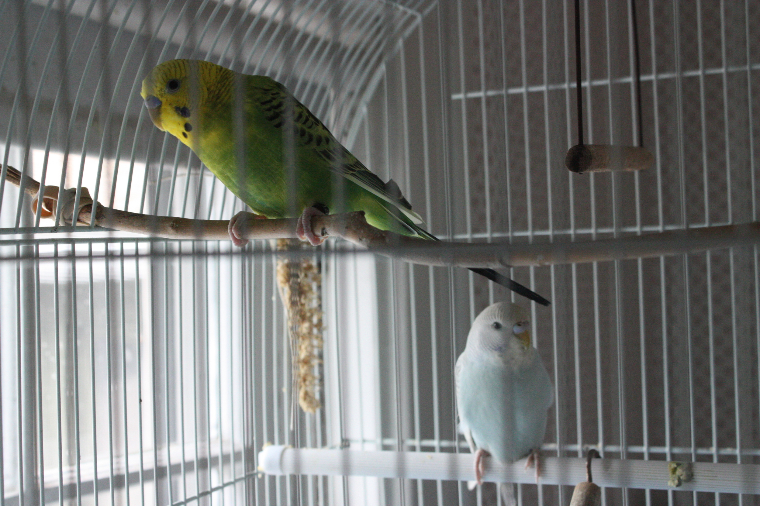 NAMING THE PARAKEETS