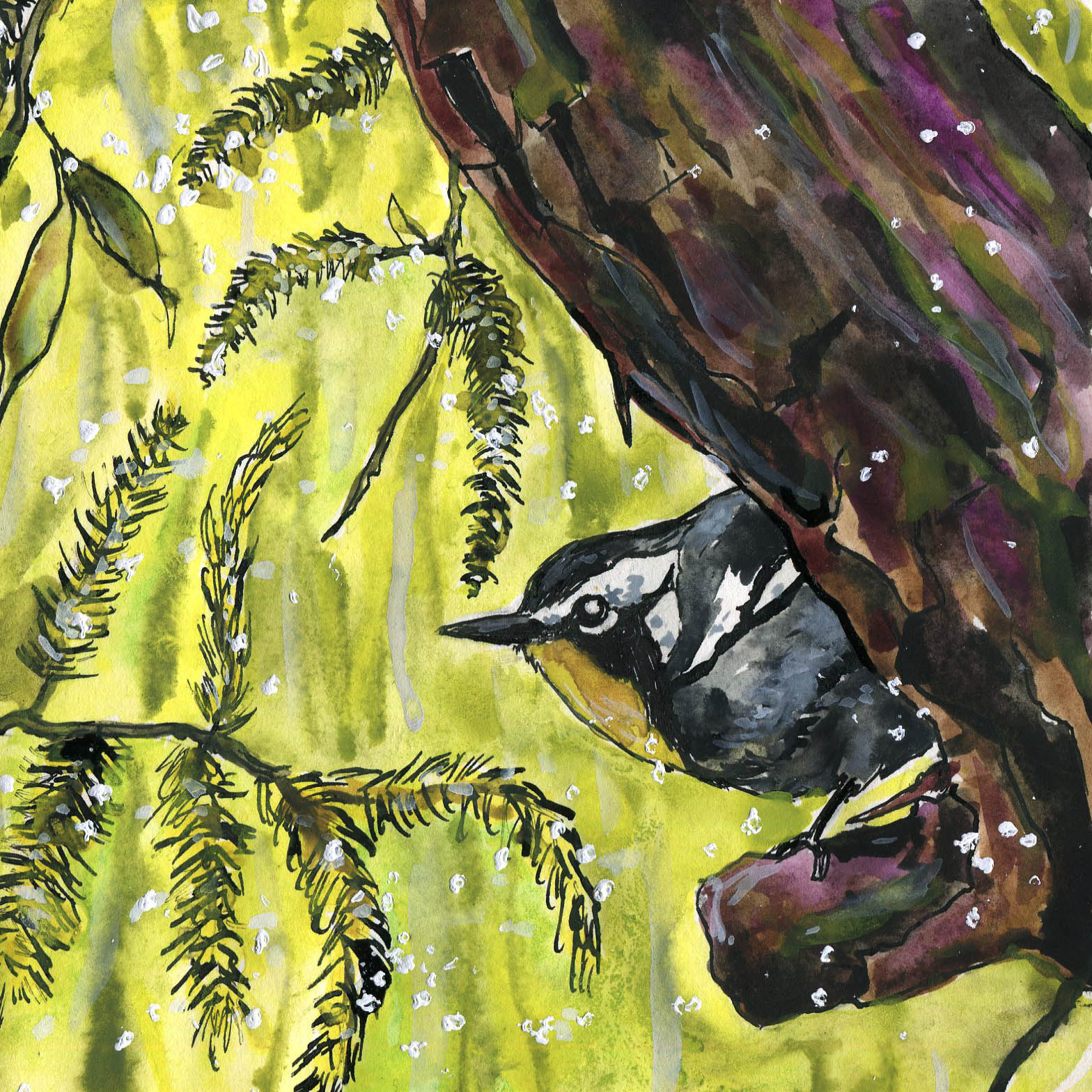 310. Yellow-throated Warbler