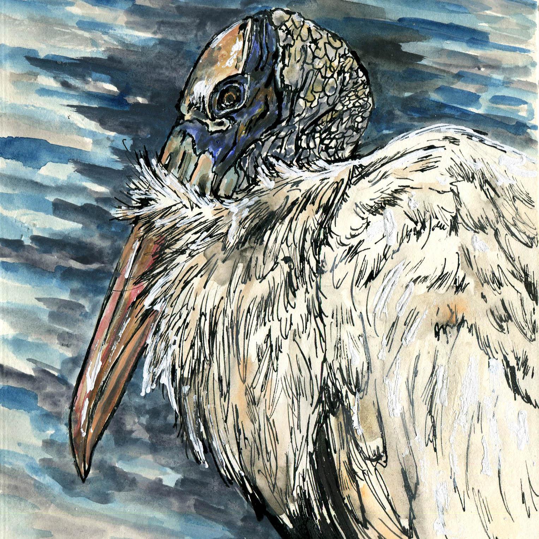 262. Wood Stork