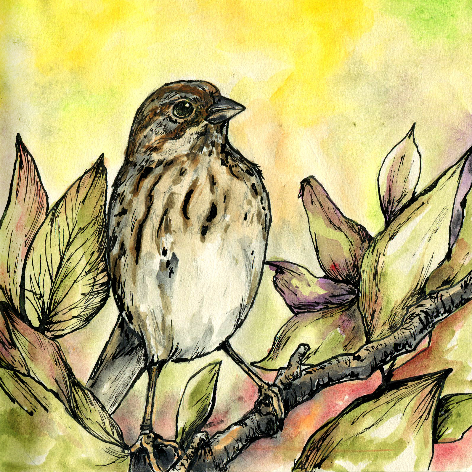 212. Lincoln's Sparrow