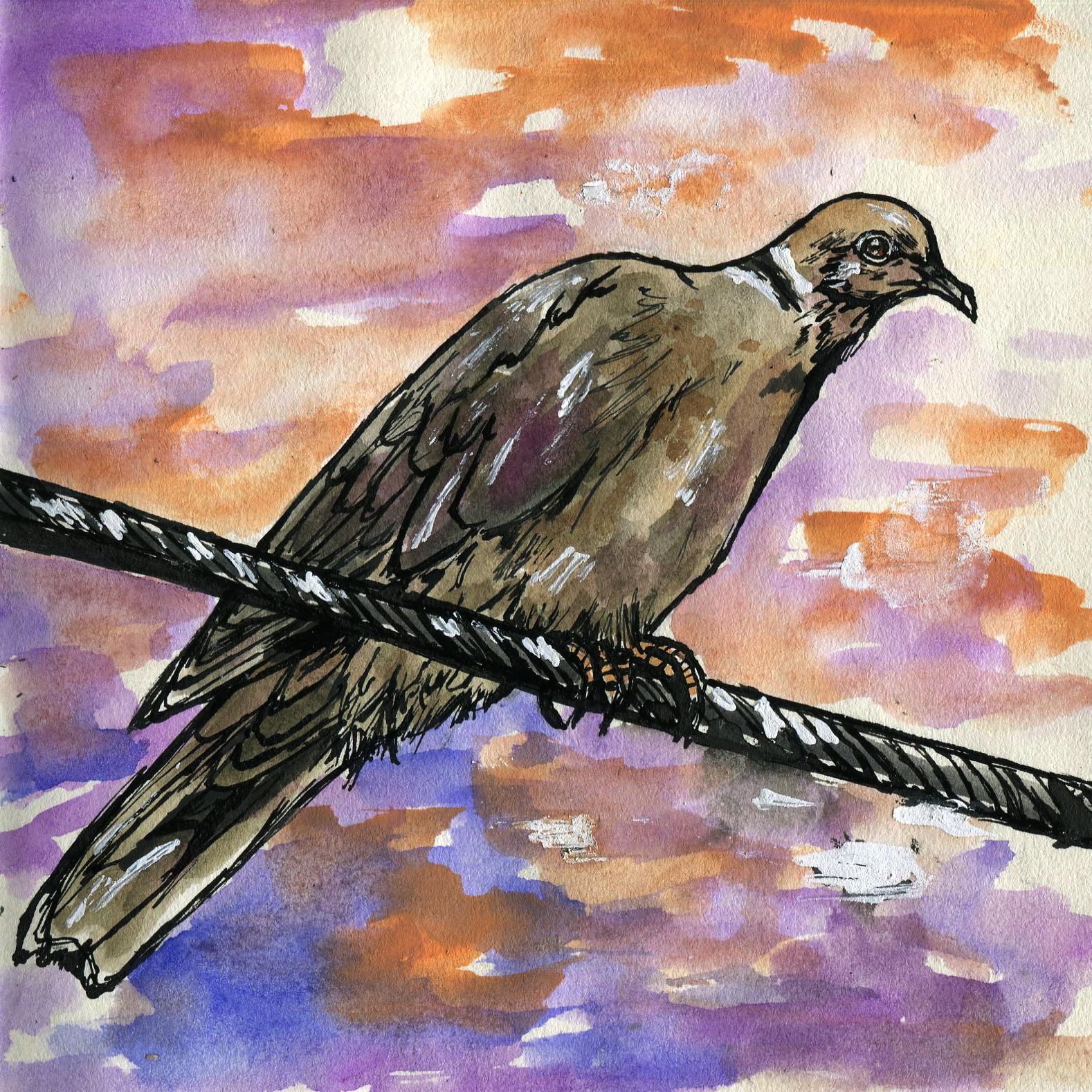 268. Eurasian Collared-dove