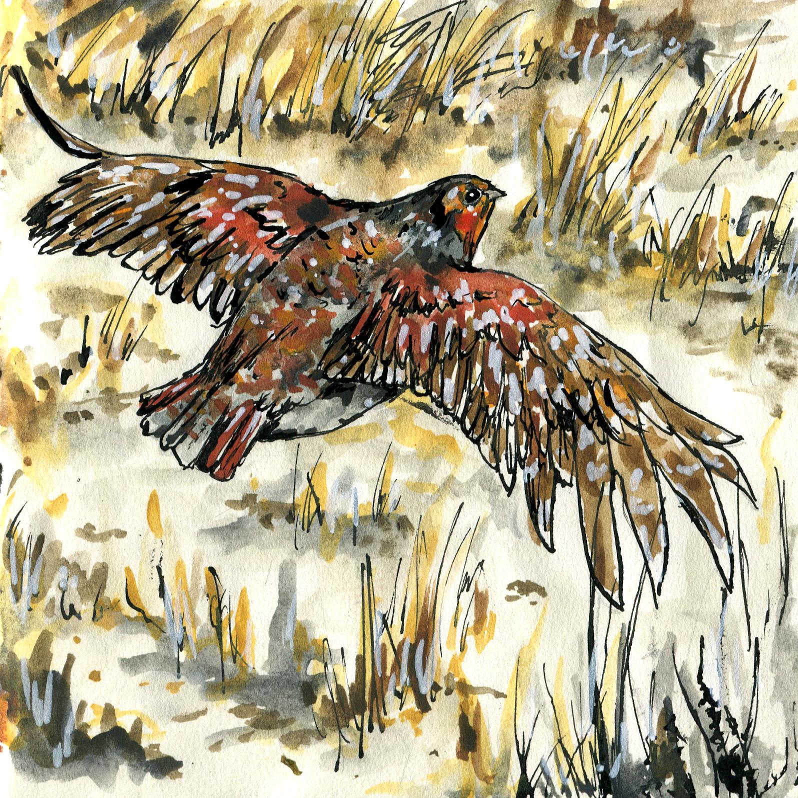 296. Gray Partridge