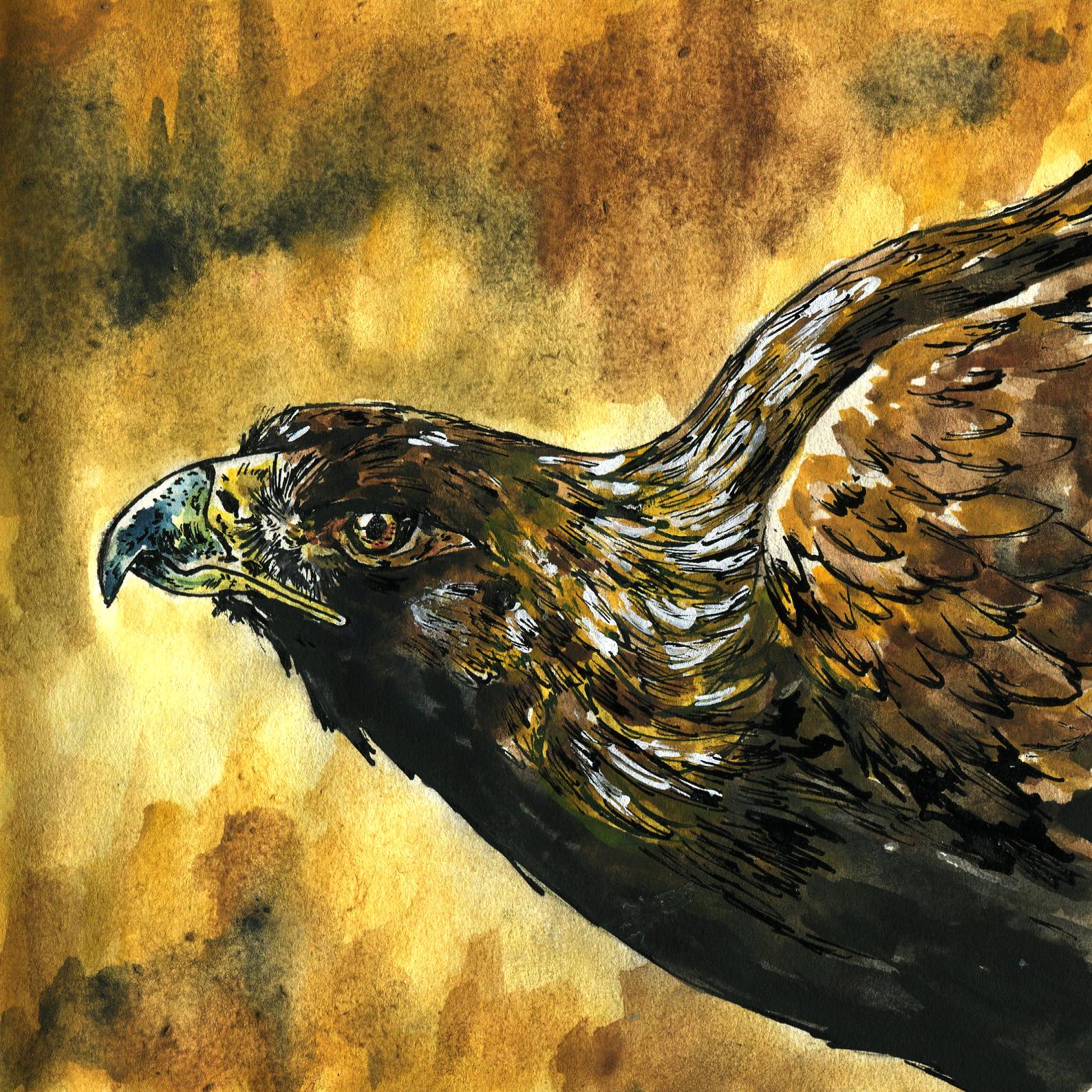 342. Golden Eagle