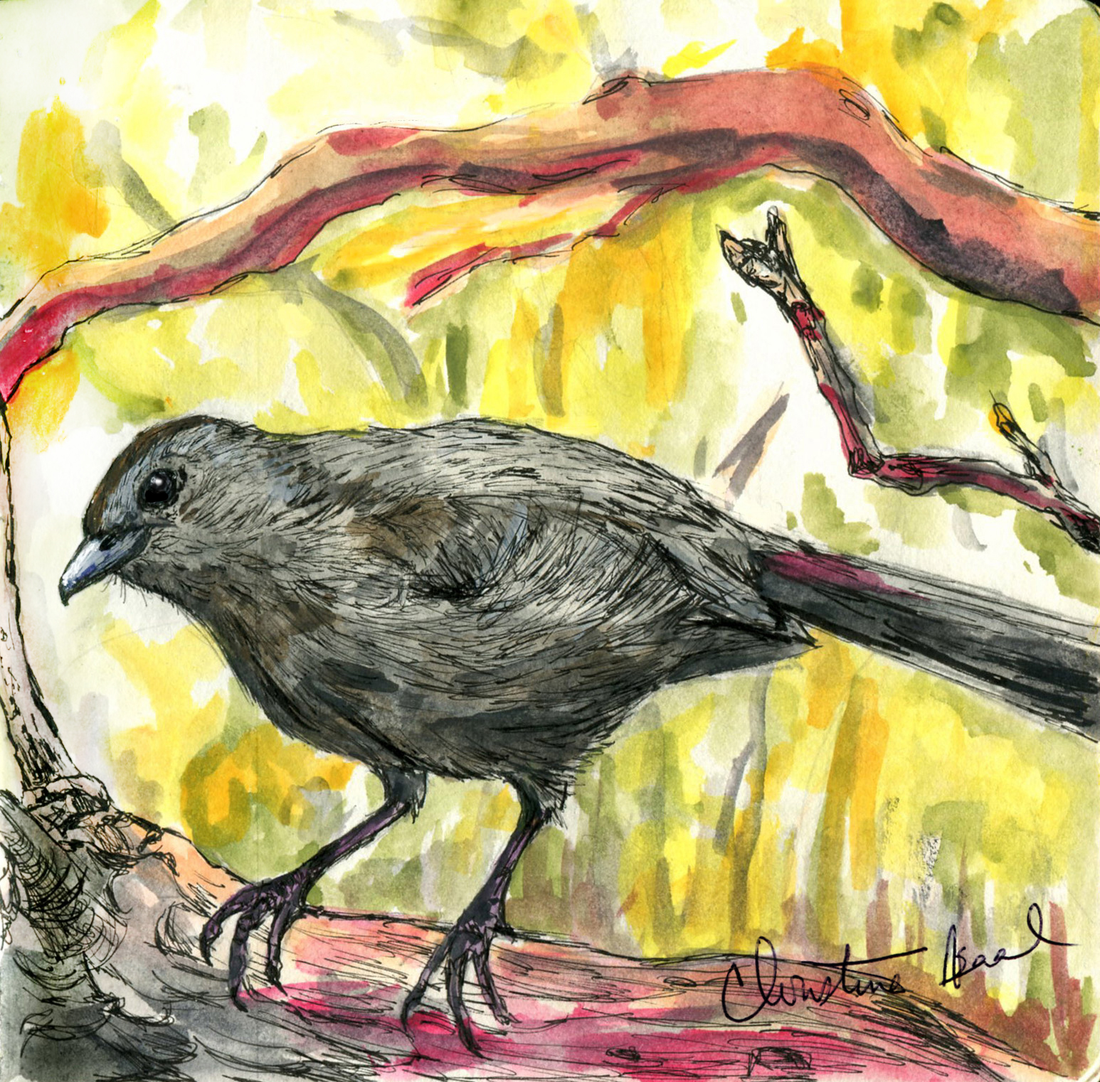 18. Gray Catbird