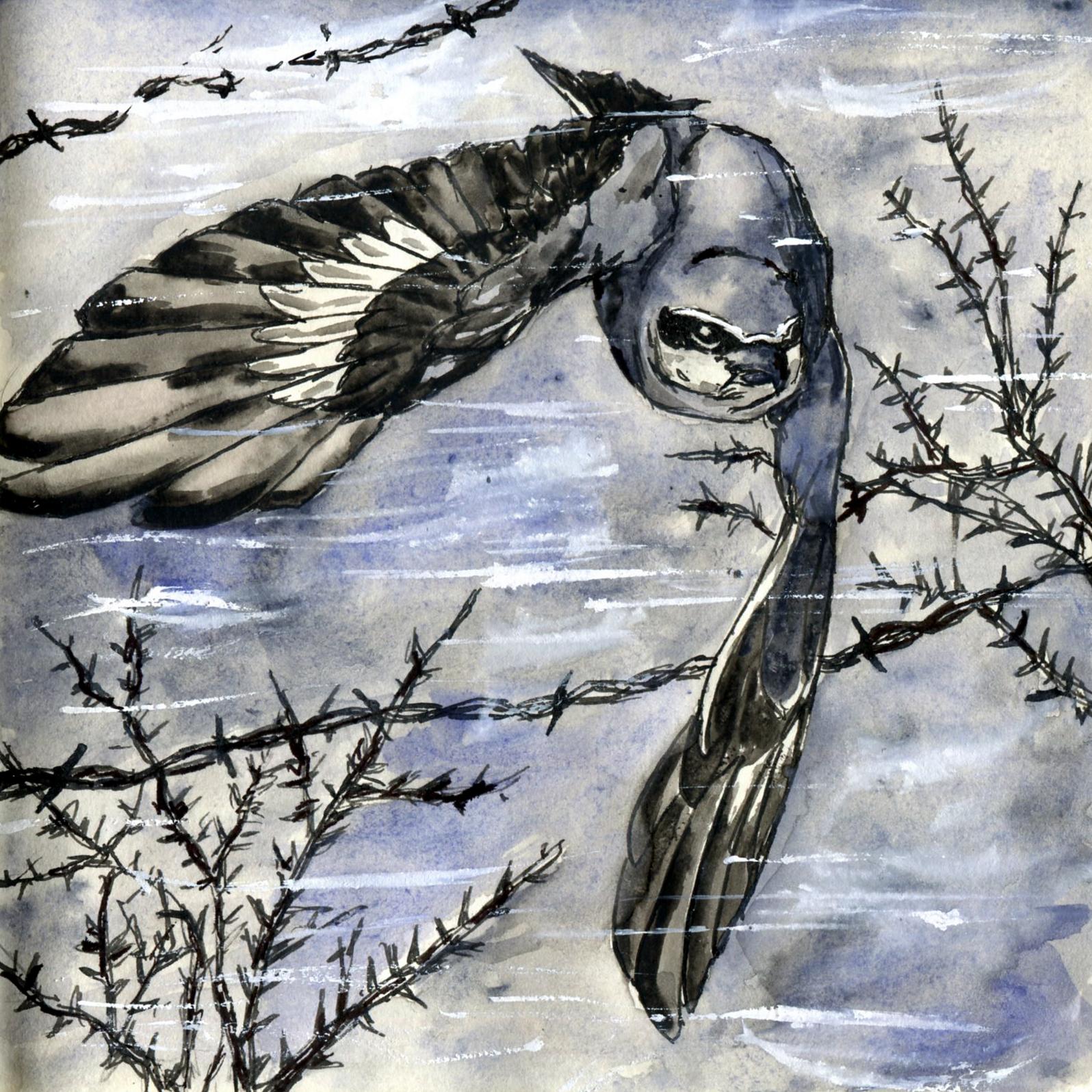 295. Northern Shrike