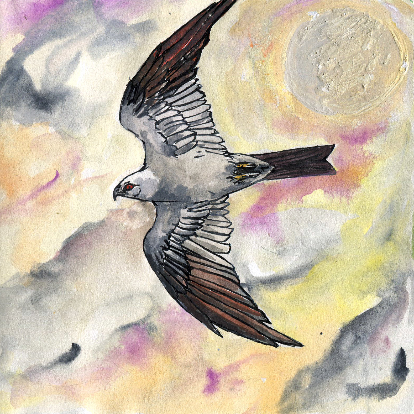 308. Mississippi Kite
