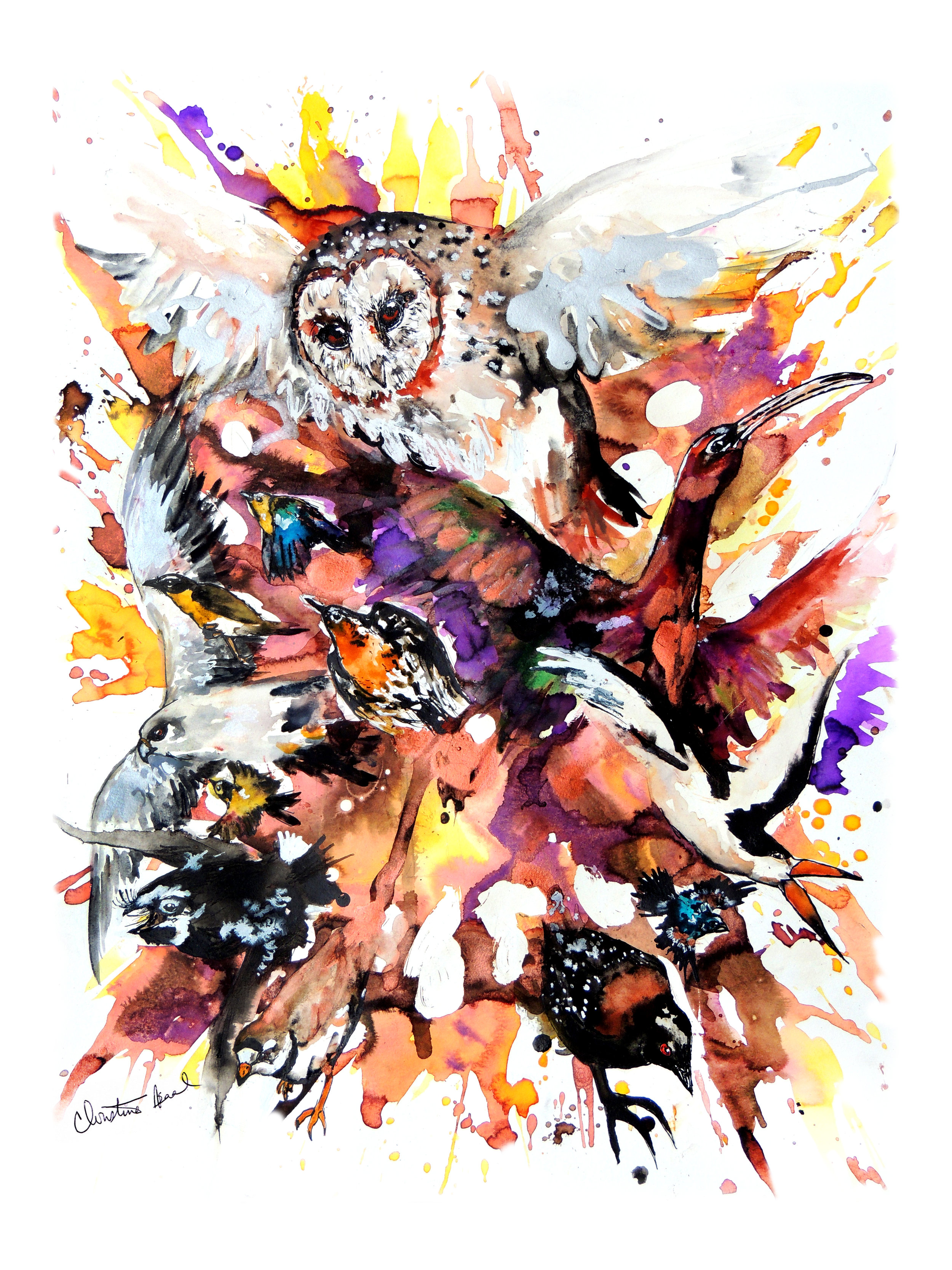 33rd Annual World Series of Birding