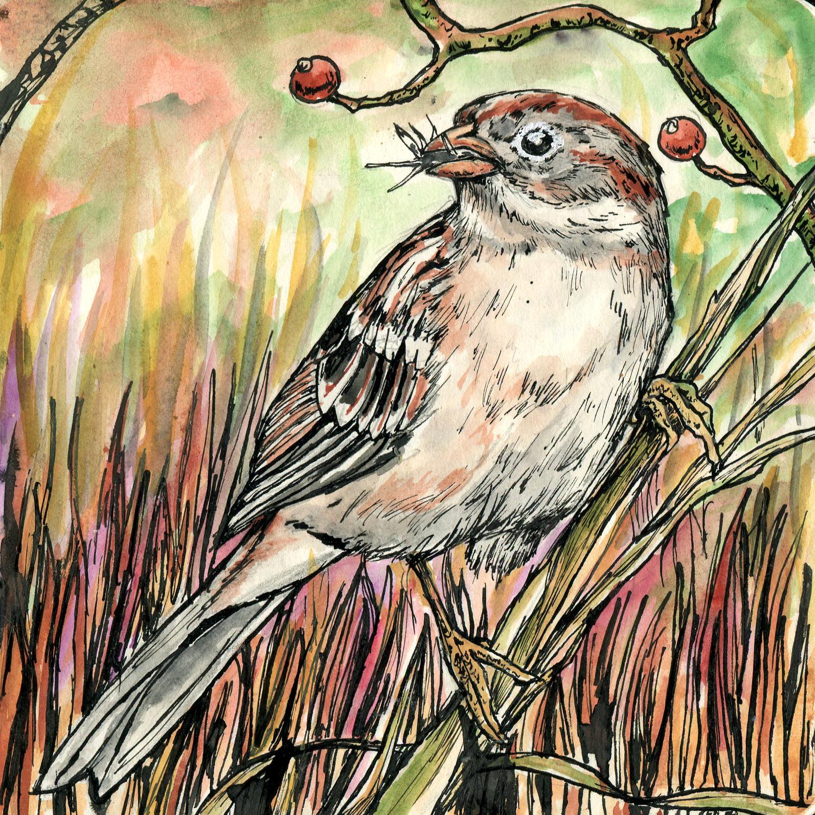136. Field Sparrow