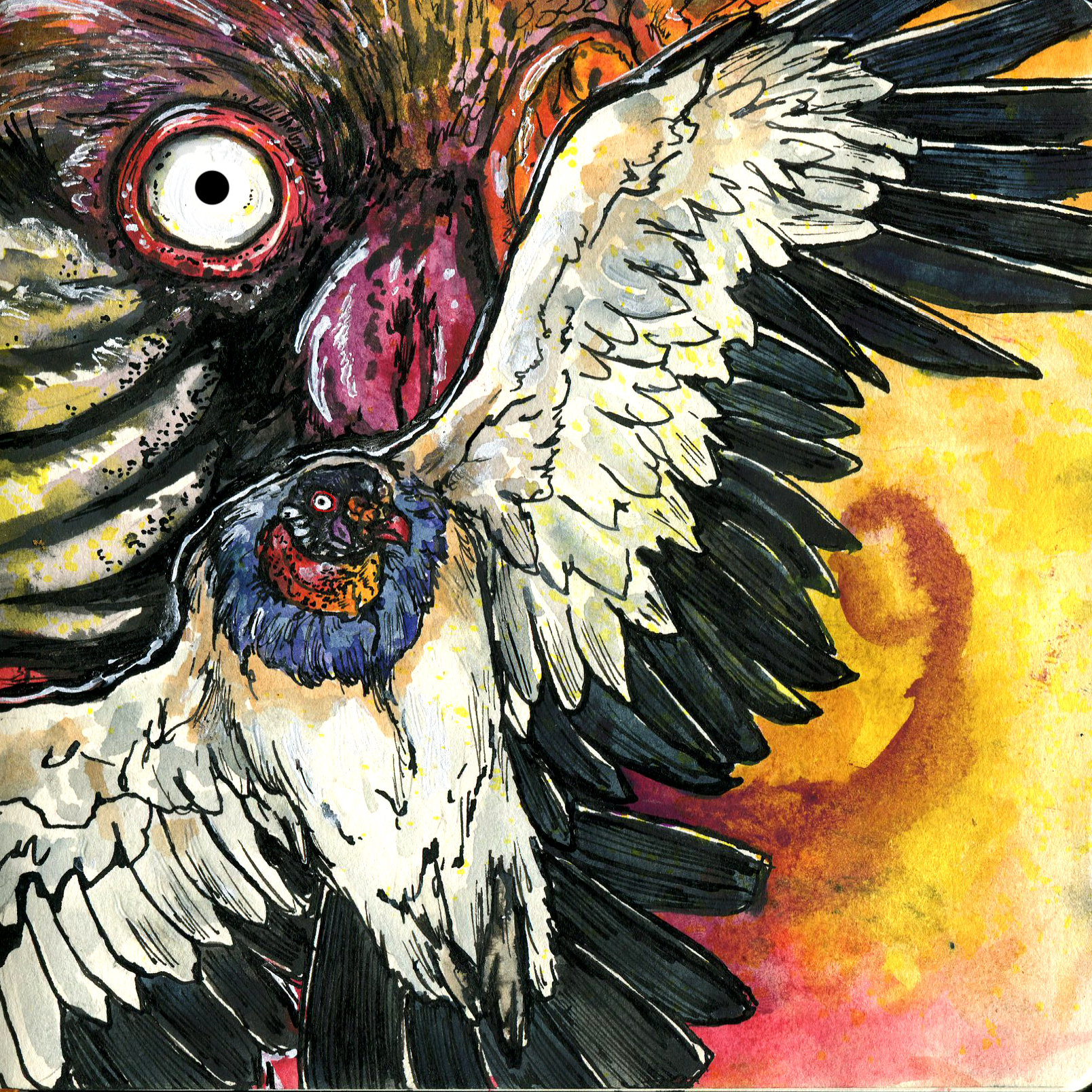 Copy of 553. King Vulture