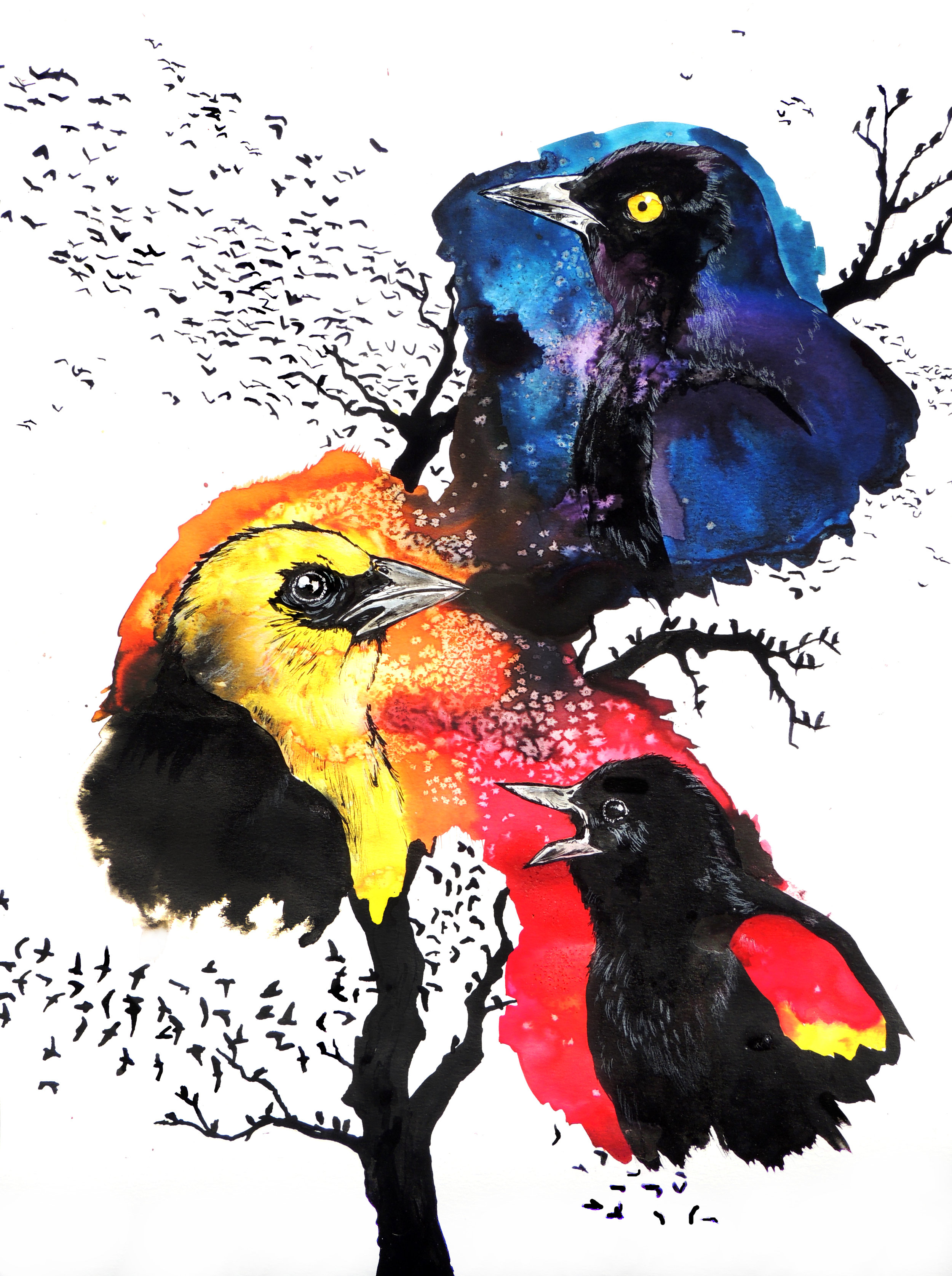 All the Colors of Blackbirds
