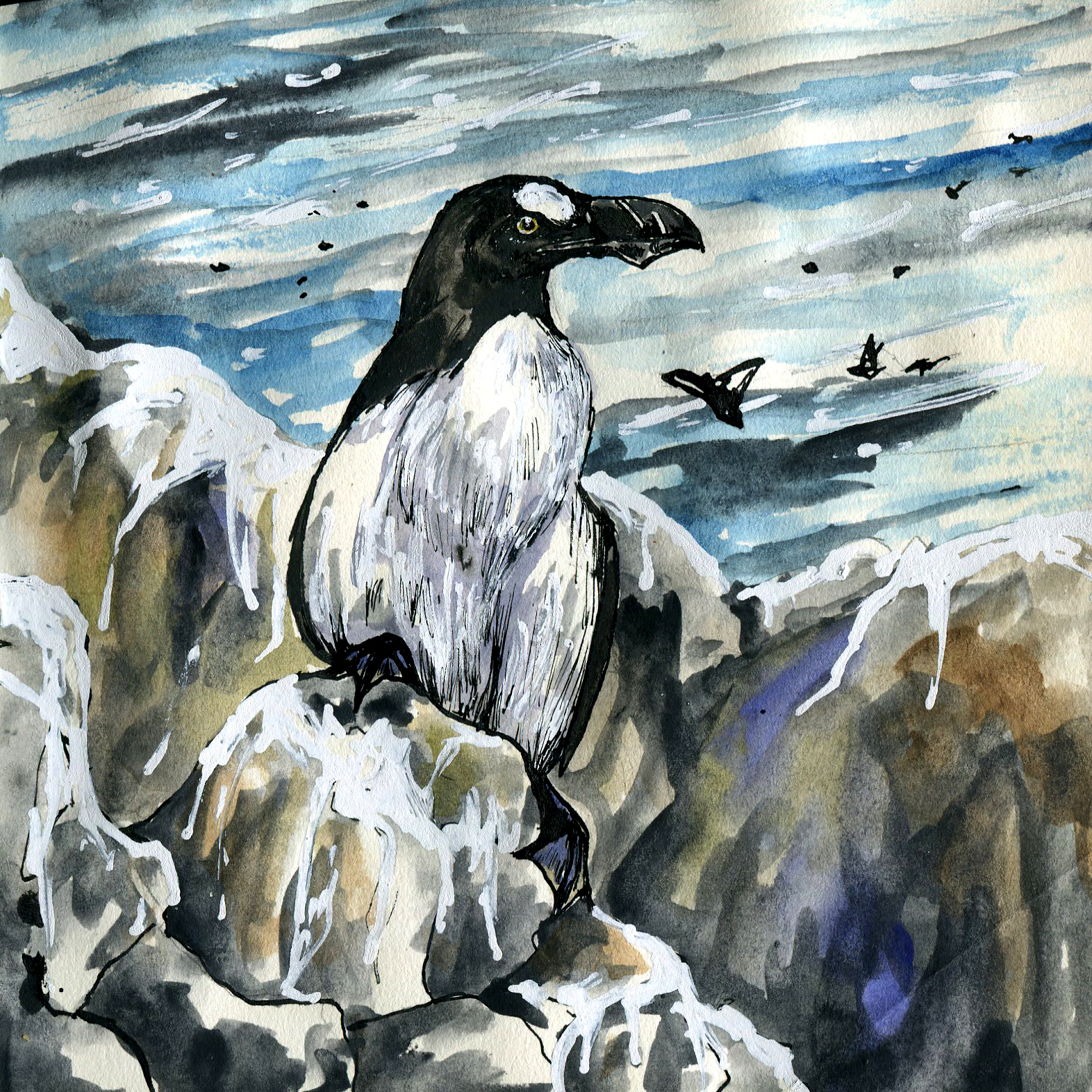 4E. Great Auk