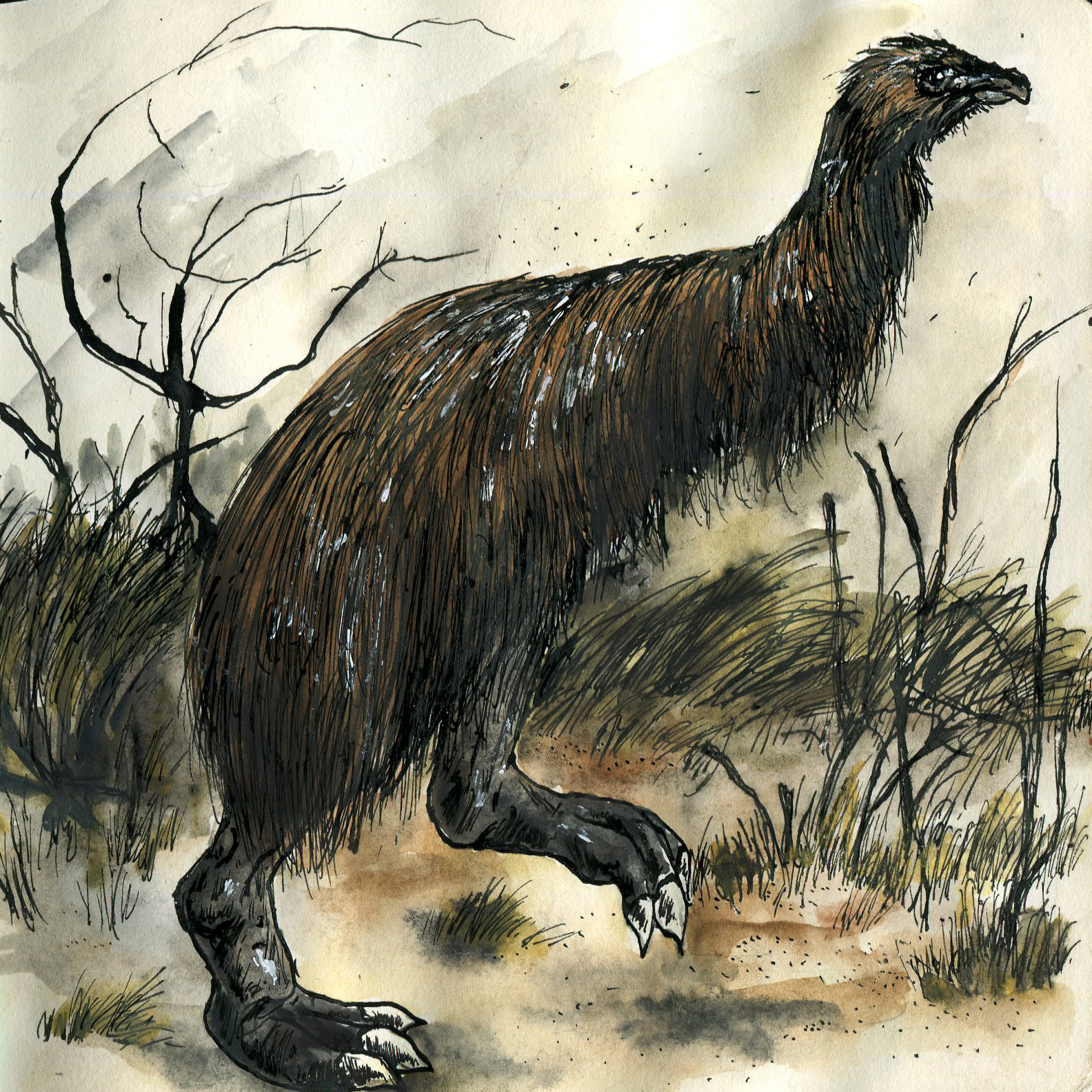 8E. South Island Giant Moa