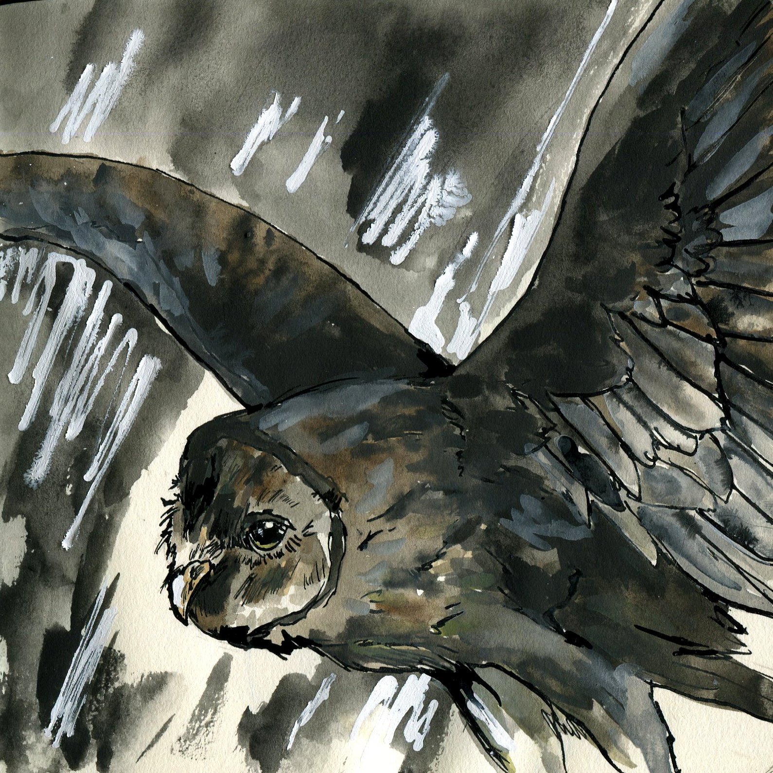 13E. Crave's Giant Barn Owl