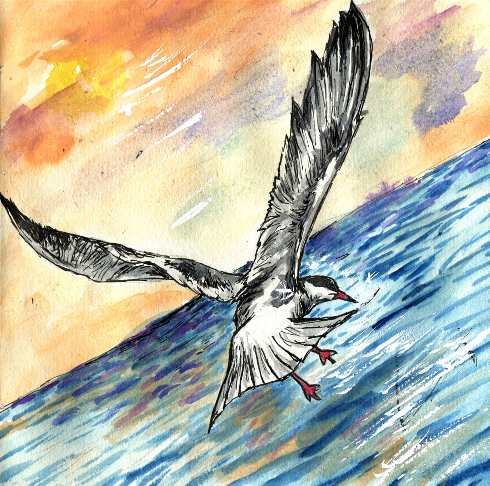 Terns and Skimmer