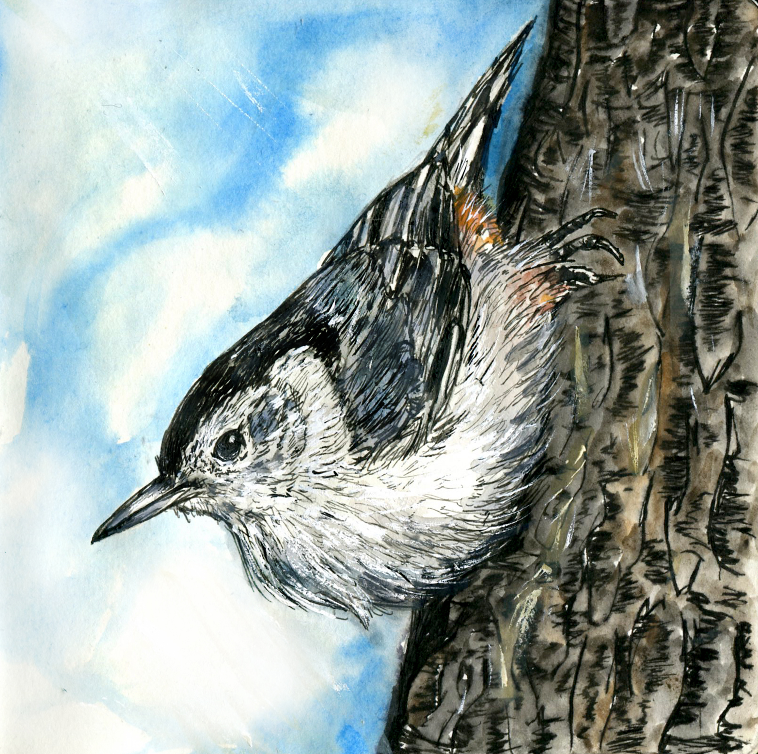 Nuthatches and Creeper