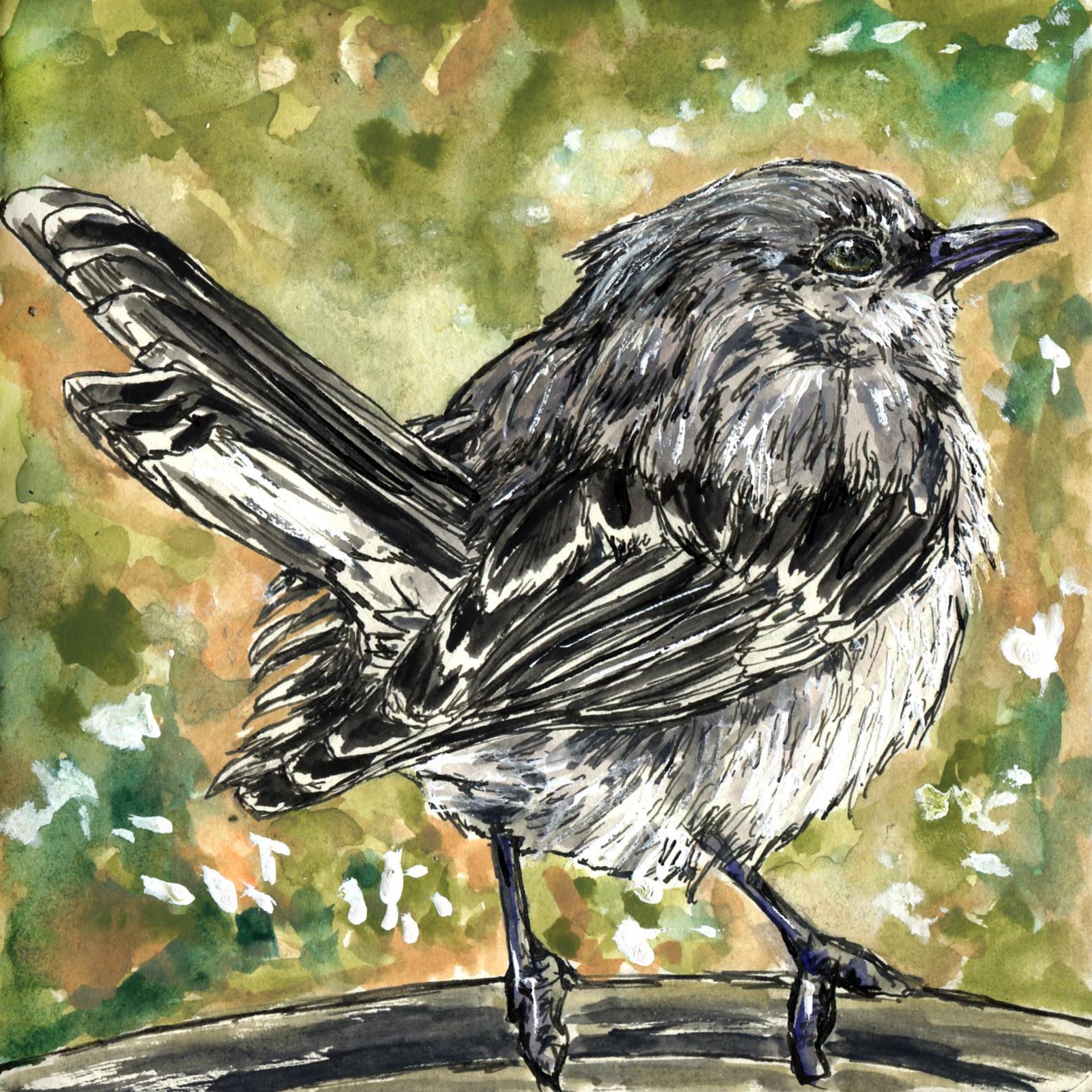 Mockingbirds, Starlings