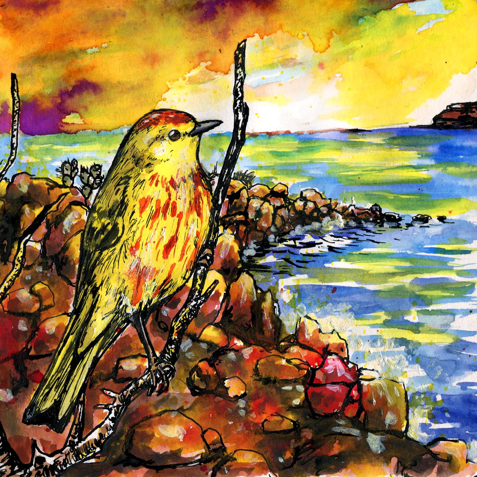 758. Galápagos Yellow Warbler