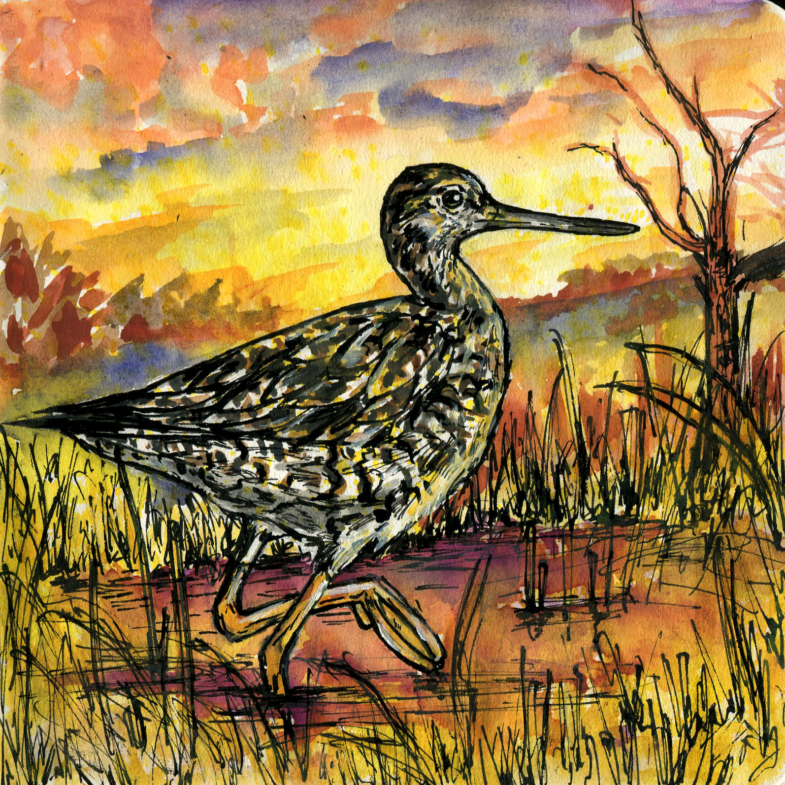 138. Greater Yellowlegs