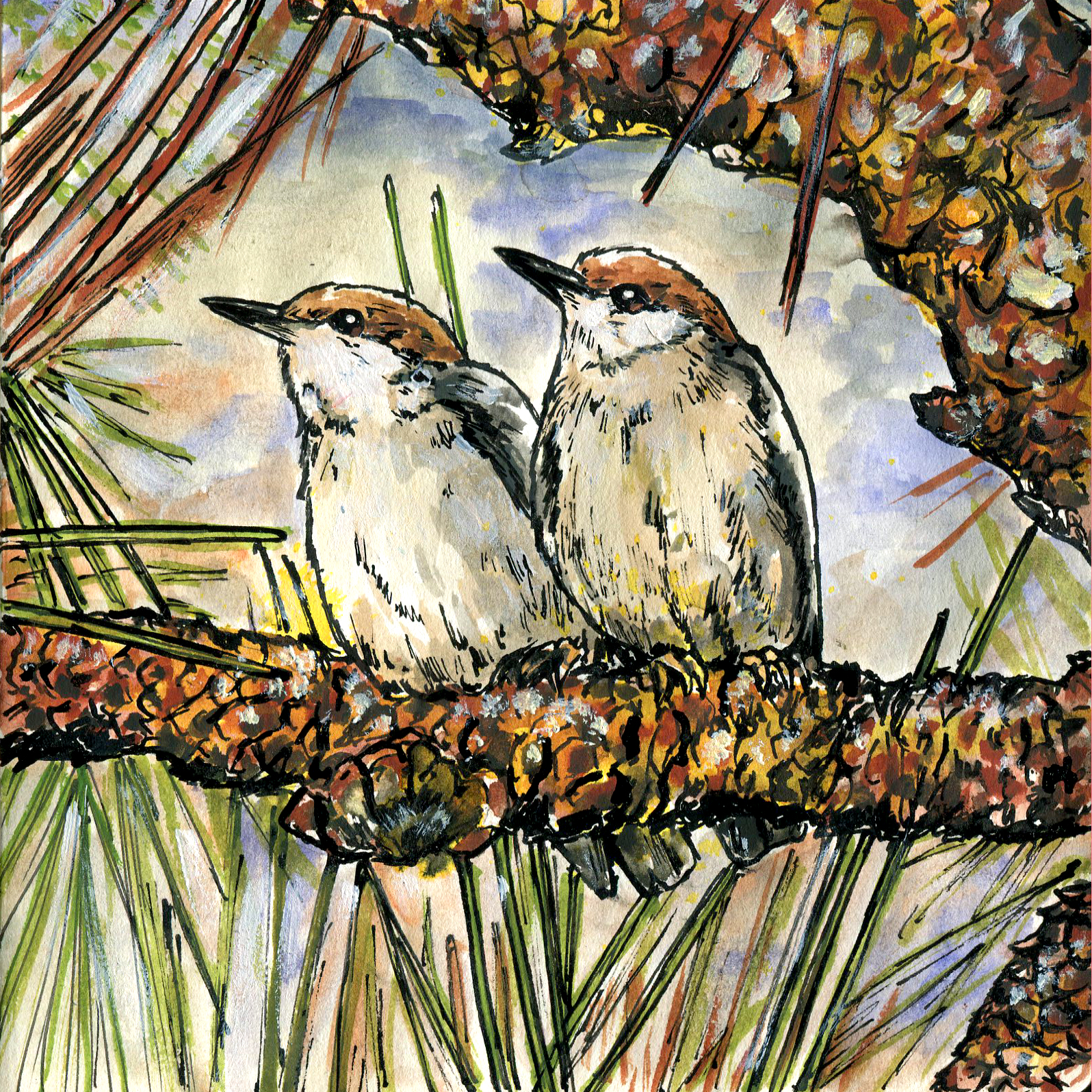 256. Brown-headed Nuthatch