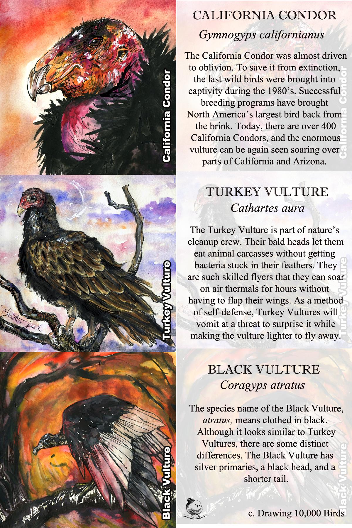 Vulture Bookmark.jpg