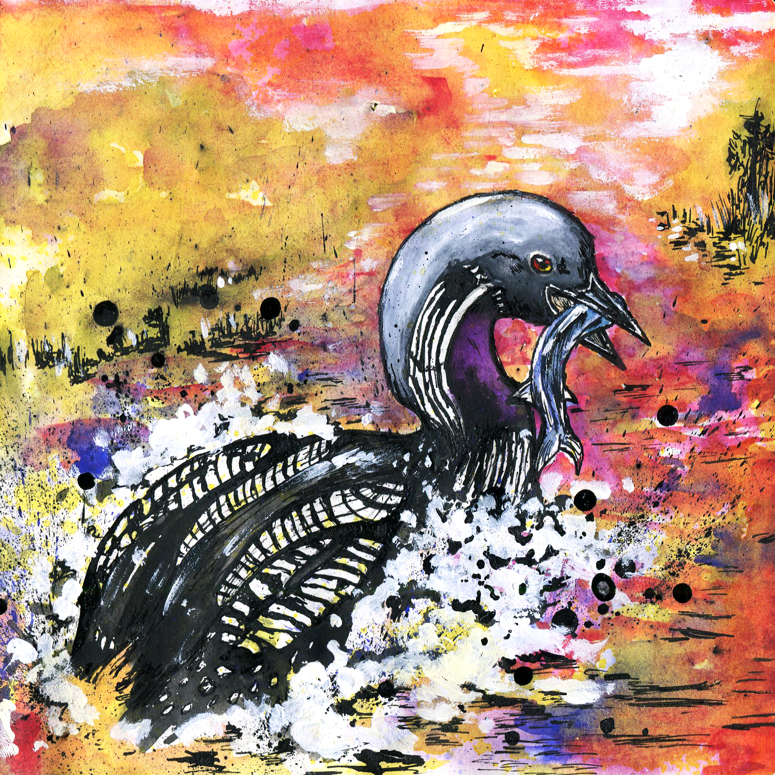385. Pacific Loon