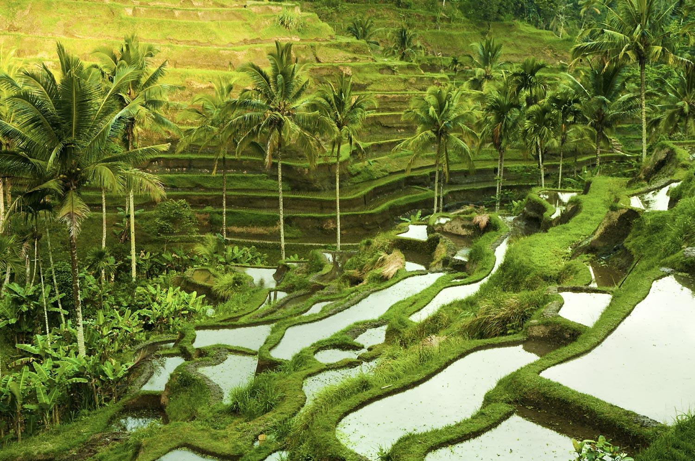 bigstock-Terrace-rice-fields-in-morning-21367466.jpg