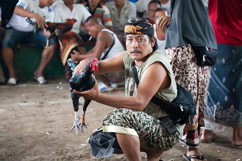 Ceremonial cockfighting | Gianyar, Bali