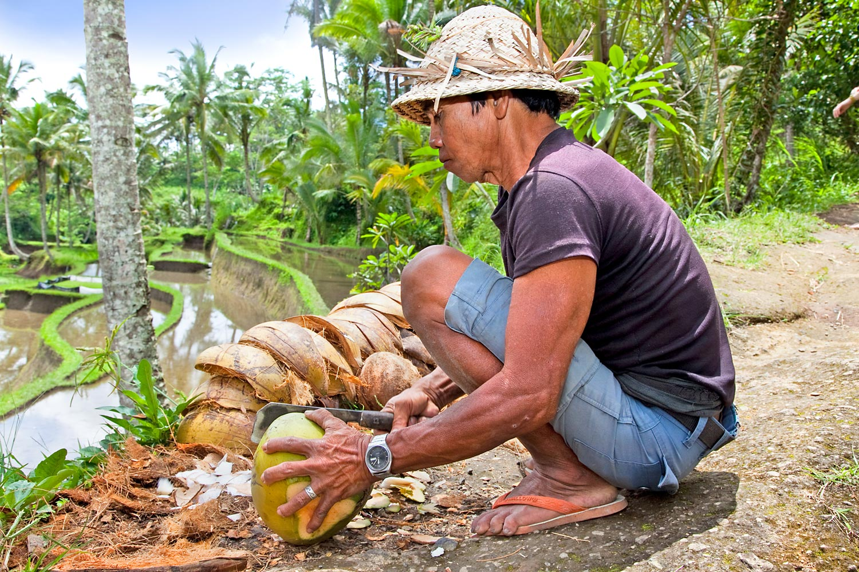 Open-Coconut-32066225.jpg