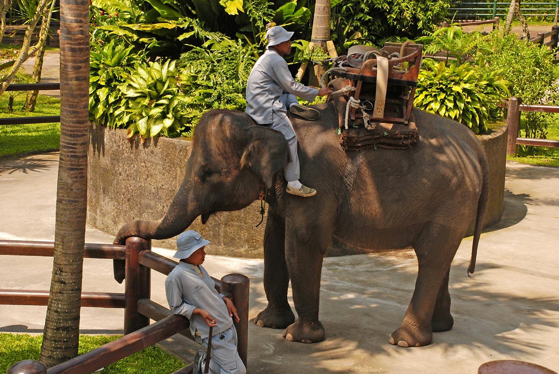Elephant-Safari-60247112.jpg