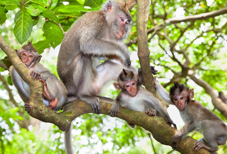 Sacred-monkey-Forest-Ubud--.jpg