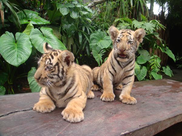 bali-zoo.jpg
