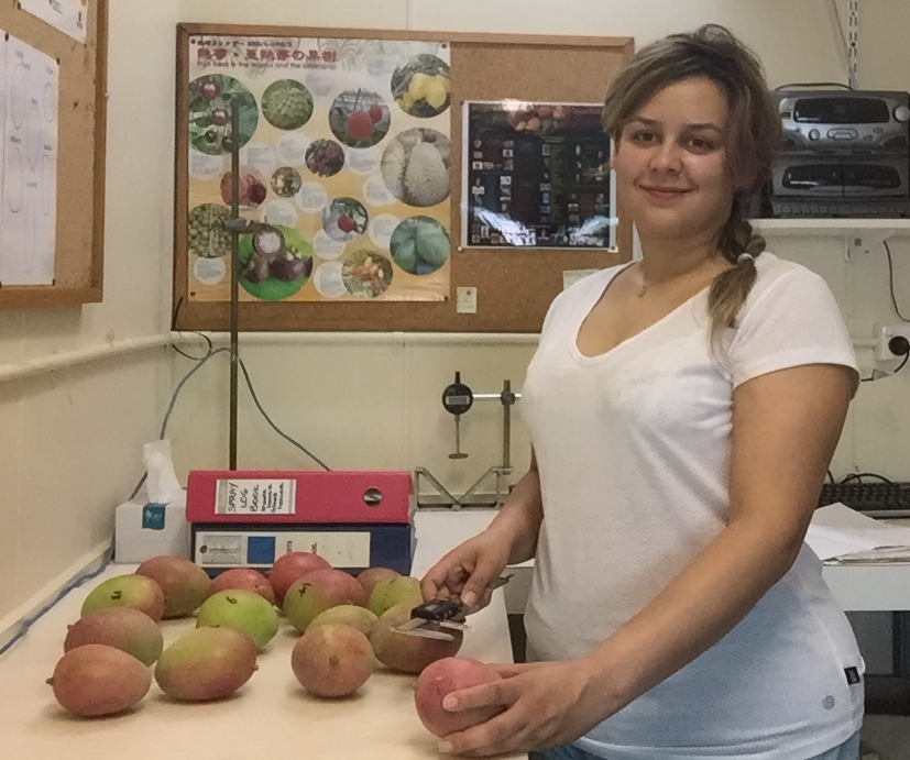 PhD student Anahita Mizani assessing the fruit quality of fruit from a crop load experiment in Mareeba.