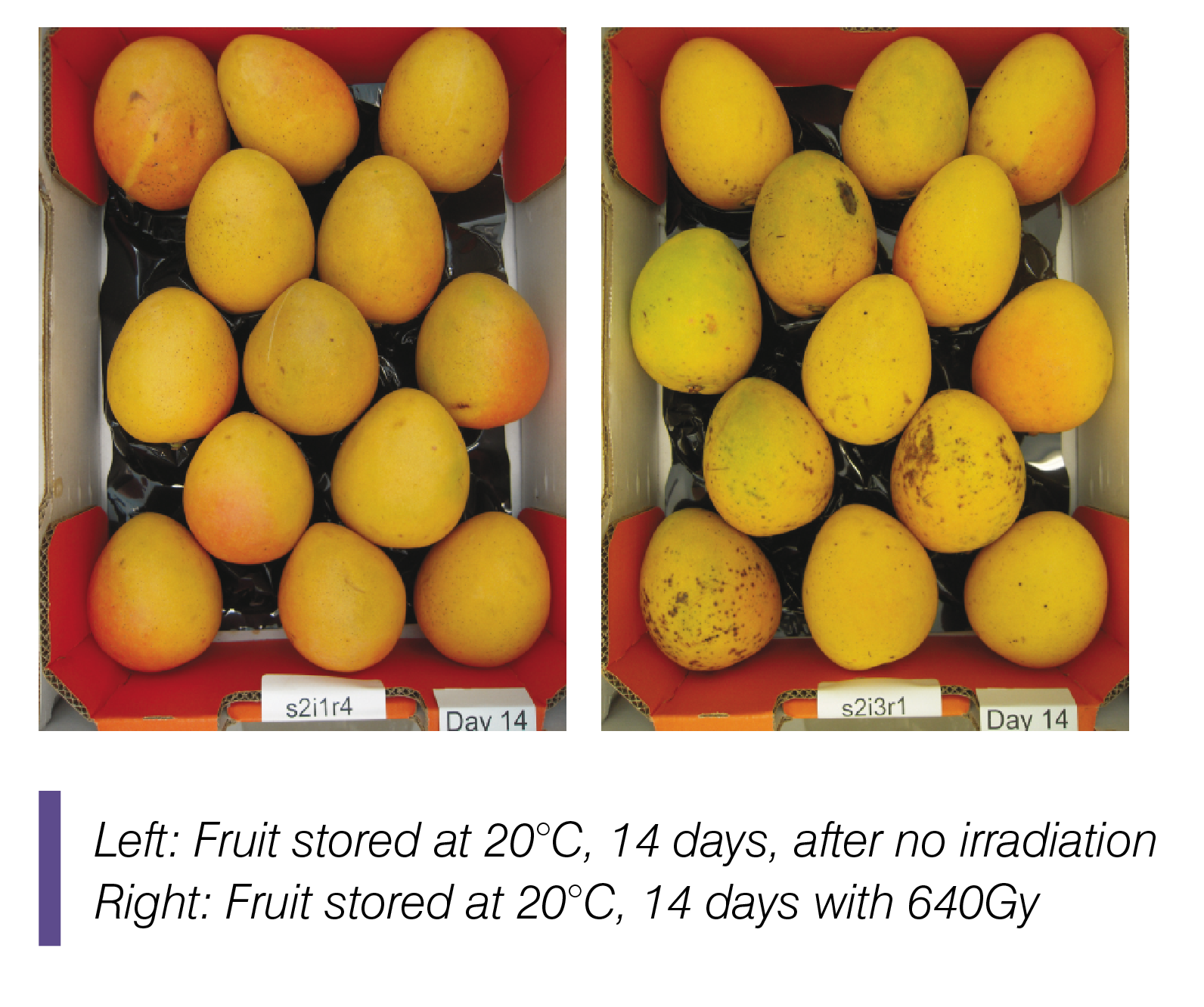 Irradiation effects in stored fruit