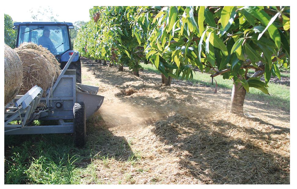 Application of hay mulch at the Samdara trial site.