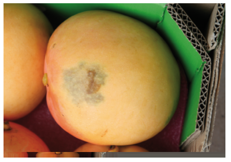 A rub mark (brown area) on Honey Gold mango with surrounding USB (grey area) associated with the rub mark.