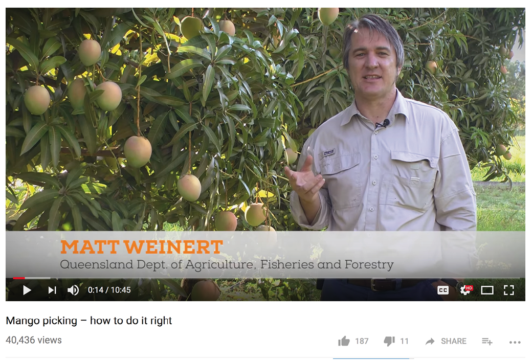 'Mango picking – how to do it right video' (2014), presented by Matt Weinert.