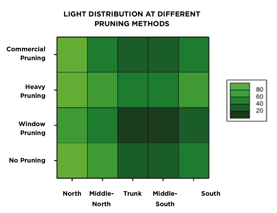 Figure 2.  Average light distribution at four heights in the canopy of commercial 'Kensington Pride' trees with four different pruning techniques.