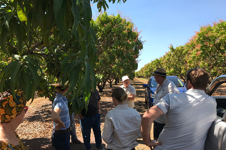 _0026_Crowd under mango tree.jpg