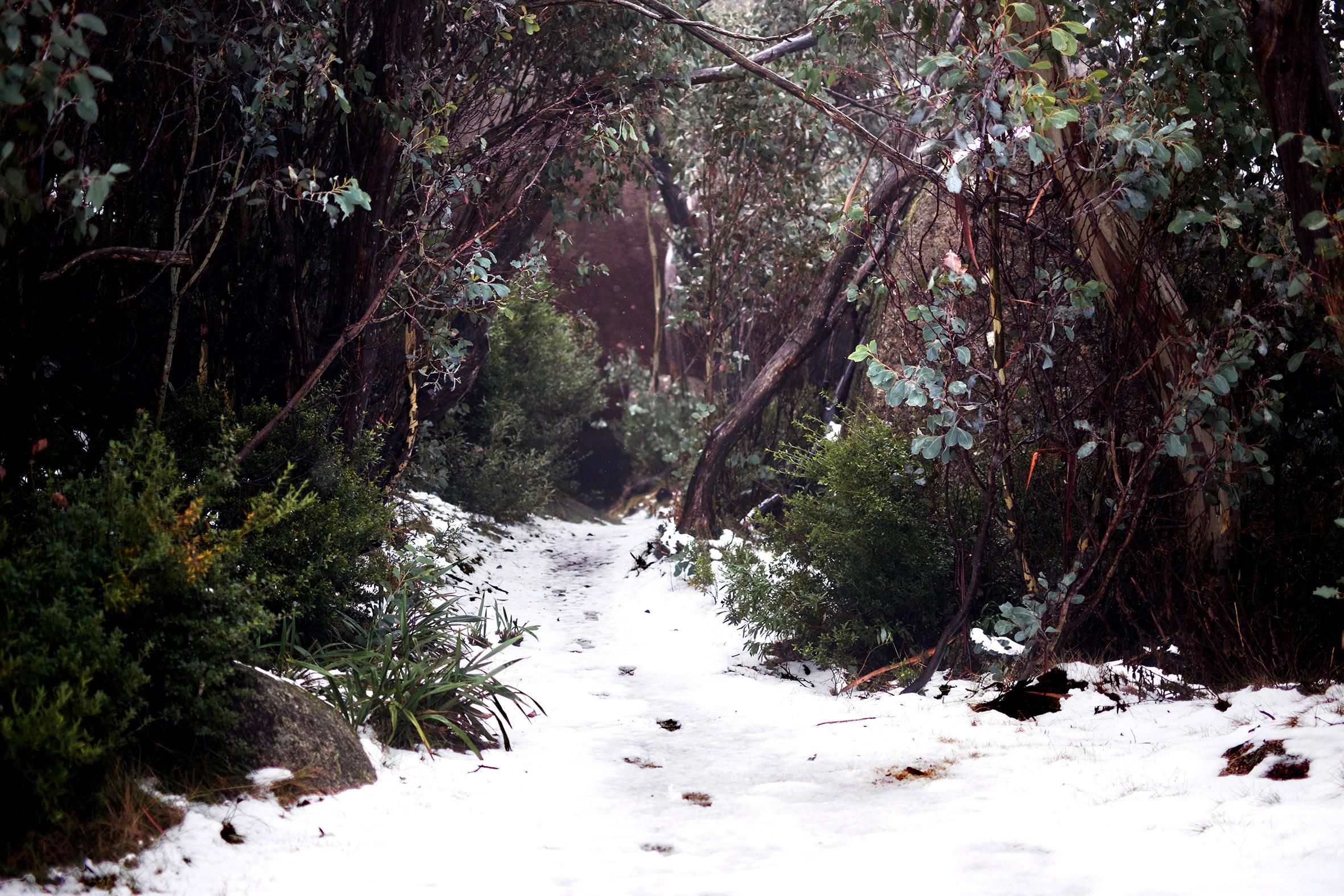 MB snow footprints.jpg