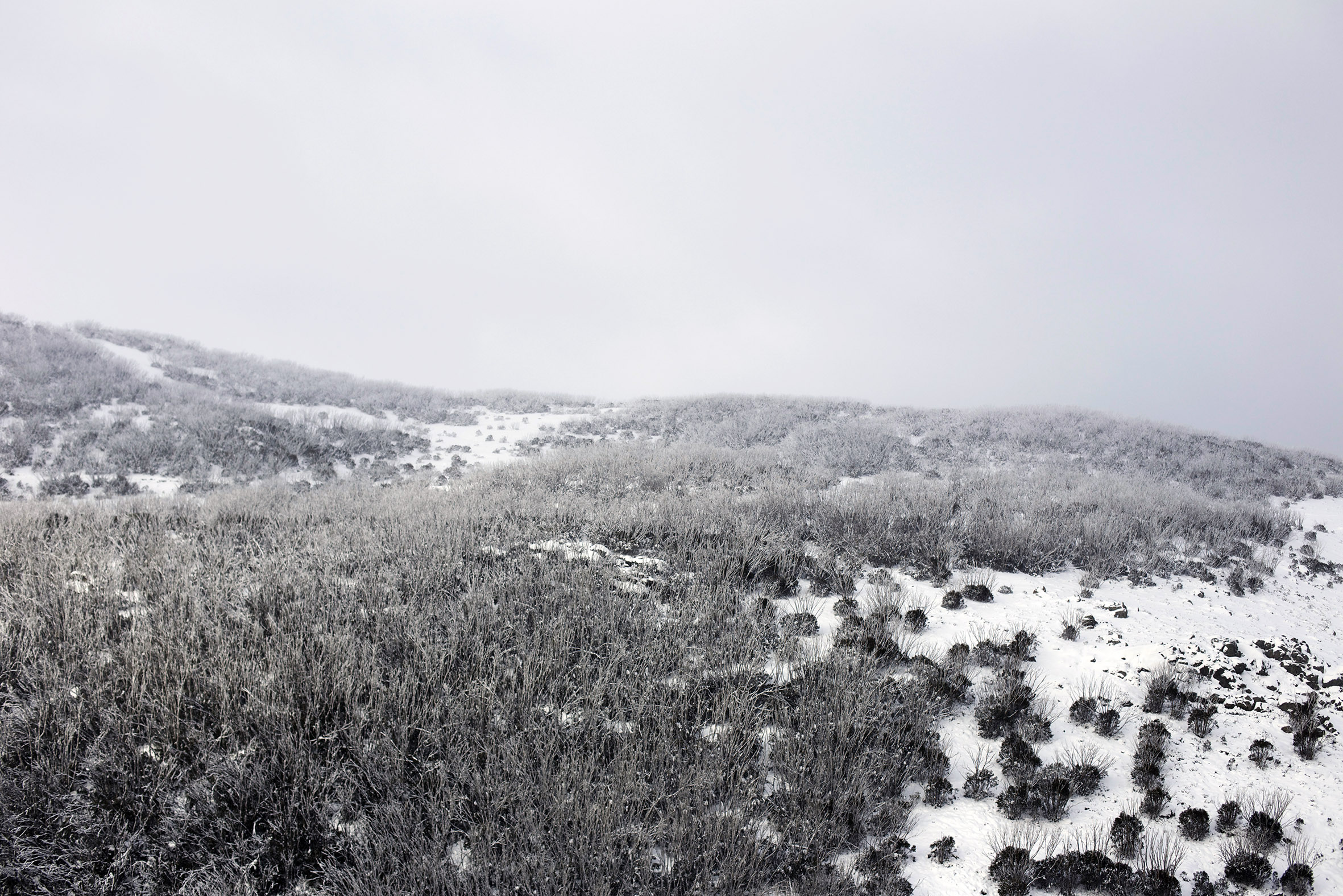 MB snow scape 3.jpg