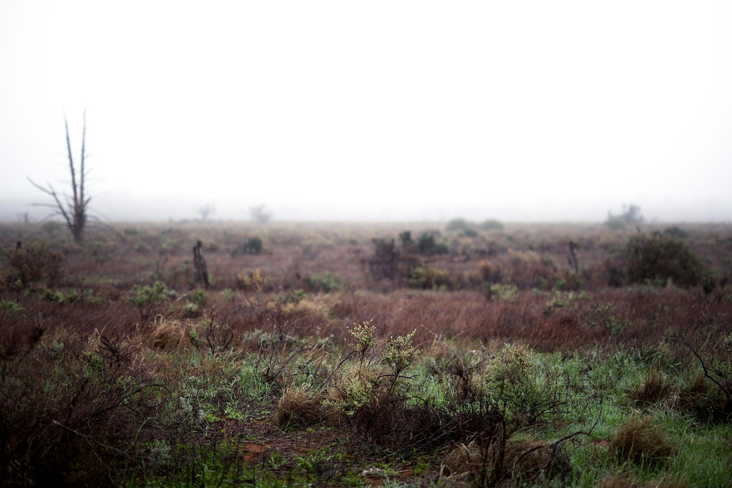 AS rainy paddock.jpg