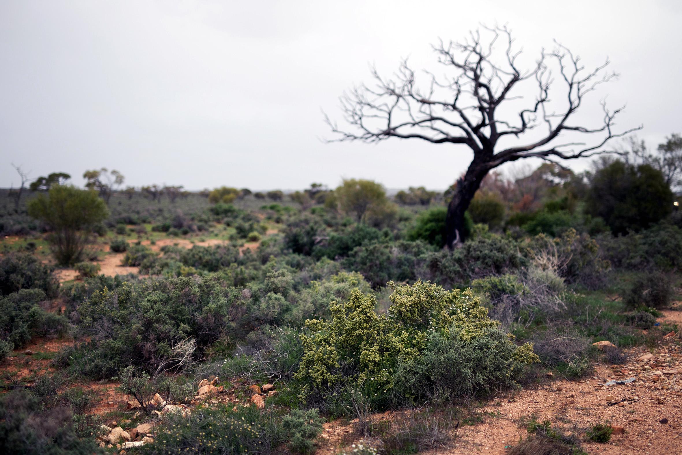 AS rainy desert.jpg