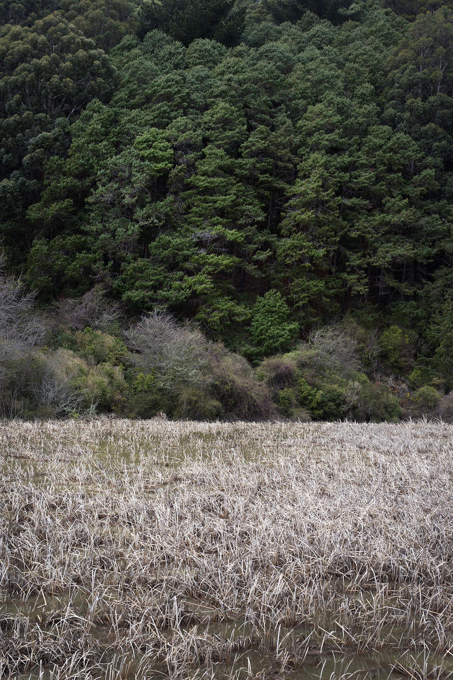 NZ grass and trees.jpg